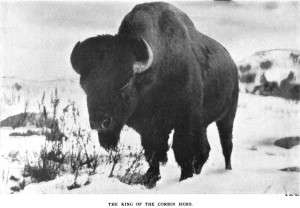 BIson at Corbin Park from the 1908 Annual Report of the American Bison Society