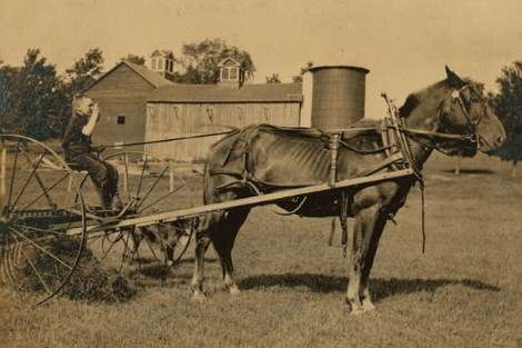 "Jack driving a horse rake. ""A small boy has difficulty keeping his seat on rough ground and this work is more or less dangerous,"" wrote Hine."