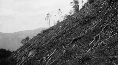 Deforestation of the White Mountains