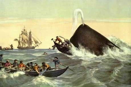 Rhode Island Colony Whaling
