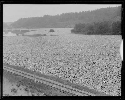 Log drive on the Kennebec River, 1922. Courtesy Boston Public Library, Leslie Jones Collection.