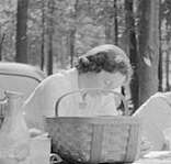 Flashback Photo: Mohawk Trail Picnics, 1941