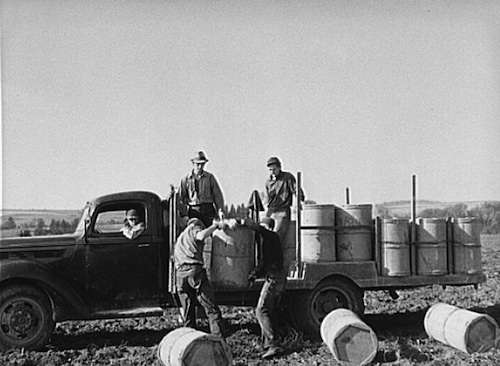 Loading barrels of potatoes onto a truck.