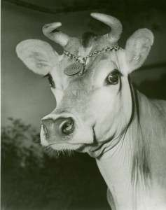 Elsie the Cow (New York Public Library)