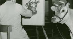 Elsie the Cow – The Massachusetts Starlet Who Brought a Cartoon to Life