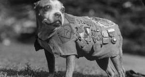 Sergeant Stubby – Connecticut's Most Famous World War I Hero