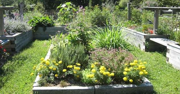A plot at the Richard D. Parker Memorial Fenway Victory Gardens