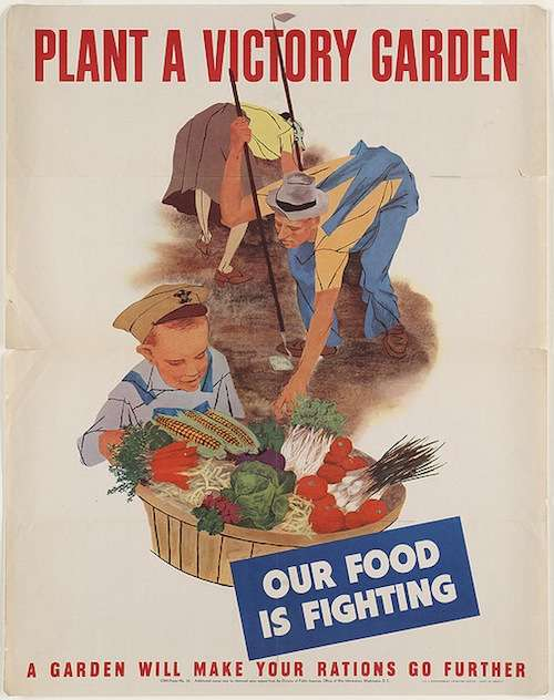 victory garden food is fighting