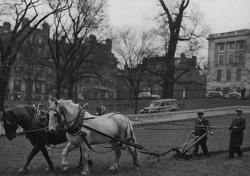 10.Sec. of Agriculture Claude Wickard and Parks Commissioner William Long with Daniel Webster's plow, Boston Common 1944. Photo courtesy National Archives.