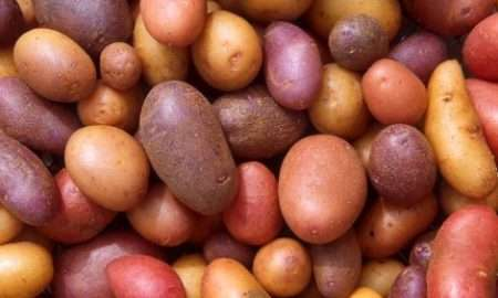 scots-irish-potato