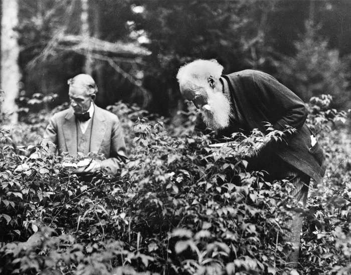 Ford and Burroughs berrying