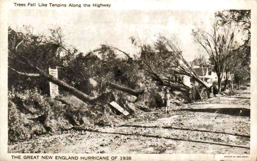 Damaged trees along a Rhode Island highway.