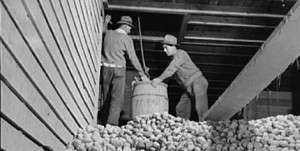 The Great Maine Potato War: The Year the Spuds Didn't Show Up