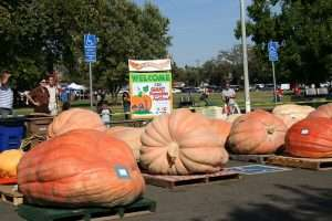 http://www.newenglandhistoricalsociety.com/wp-content/uploads/2016/07/giant-pumpkin-festival.jpg