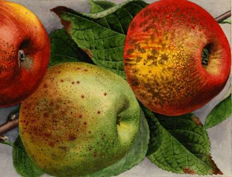 6-historic-apple-orchards-dept-of-ag
