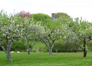 6-historic-apple-orchards-rhode-island