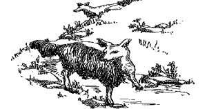 Illustration of a Gyascutus from Henry Tryon's Fearsome Critters.